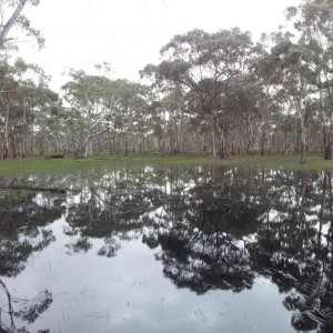 Eaglehawk Waterhole