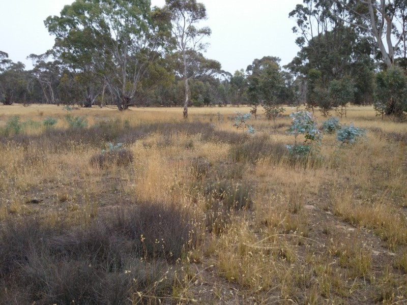 Natural regeneration at Eaglehawk Waterhole