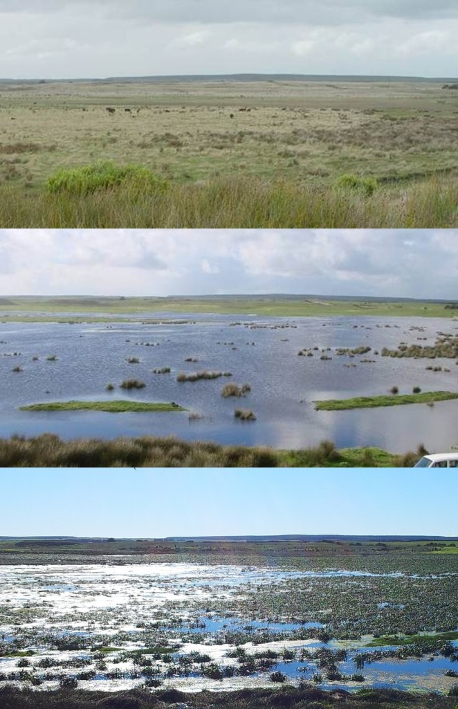 The restoration of Pick Swamp; from 2007 to 2012.