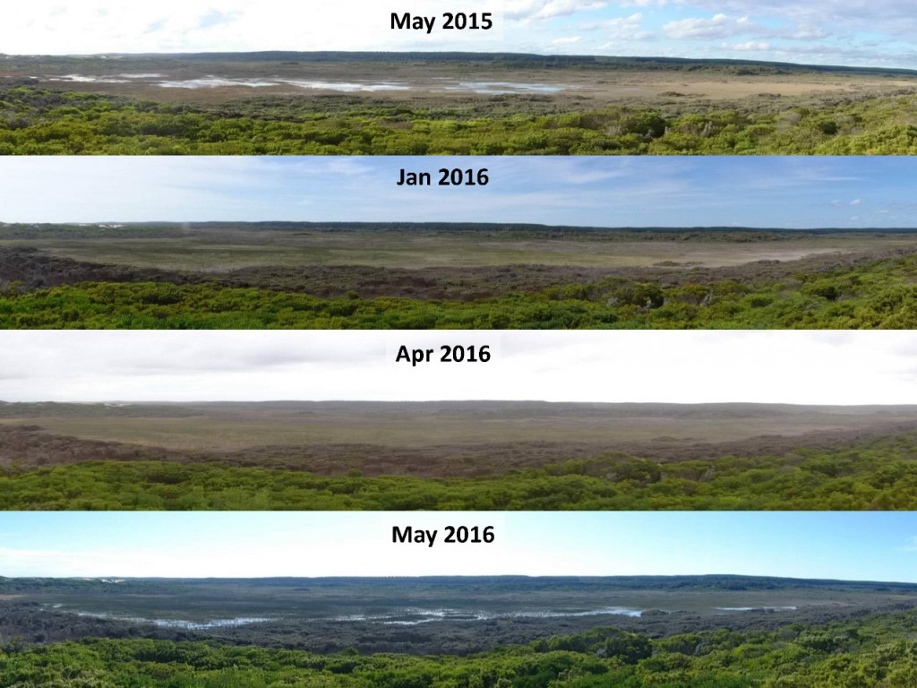 Long Swamp, inland of Nobles Rocks, showing how it looks compared to this time last year, and how it fared over the summer/autumn.