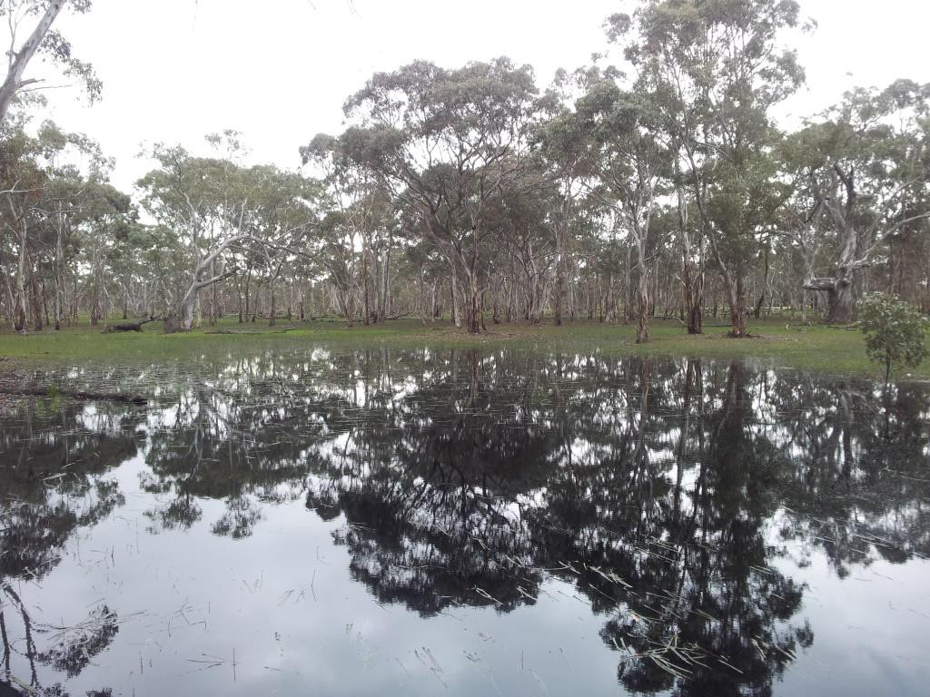 One of the seasonal wetlands surrounded by woodland at Eaglehawk Waterhole