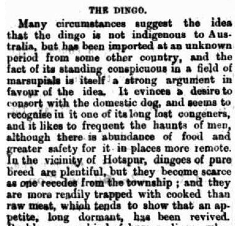 Border Watch - 14th April 1880: The Dingo at Hotspur in SW Victoria.