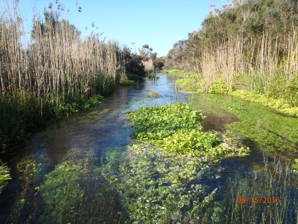 Fast flowing water and dense vegetation downstream of Stratmans Pool provide ideal habitat for variegated pygmy perch, Glenelg spiny crayfish and river blackfish.