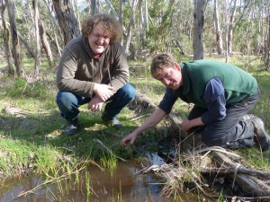 Troy and Tom looking at the small colony of the 'Broad-leaf Stinkweed' at Wandilo.