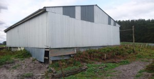 The western end of the woolshed - Before windows...