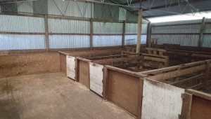 The original interior of the woolshed with yards in place.