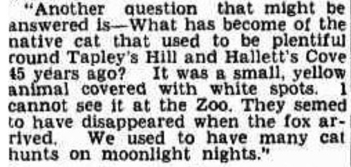 Article from the Adelaide Chronicle, December 1940