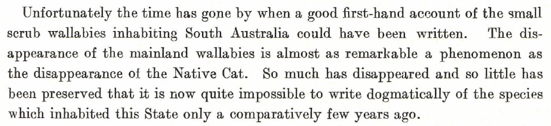 "The loss of small wallabies, like the ""Tasmanian Pademelon"" is described in this paragraph by Wood Jones in ""The Mammals of South Australia"" - published in three parts between 1923 and 1925."