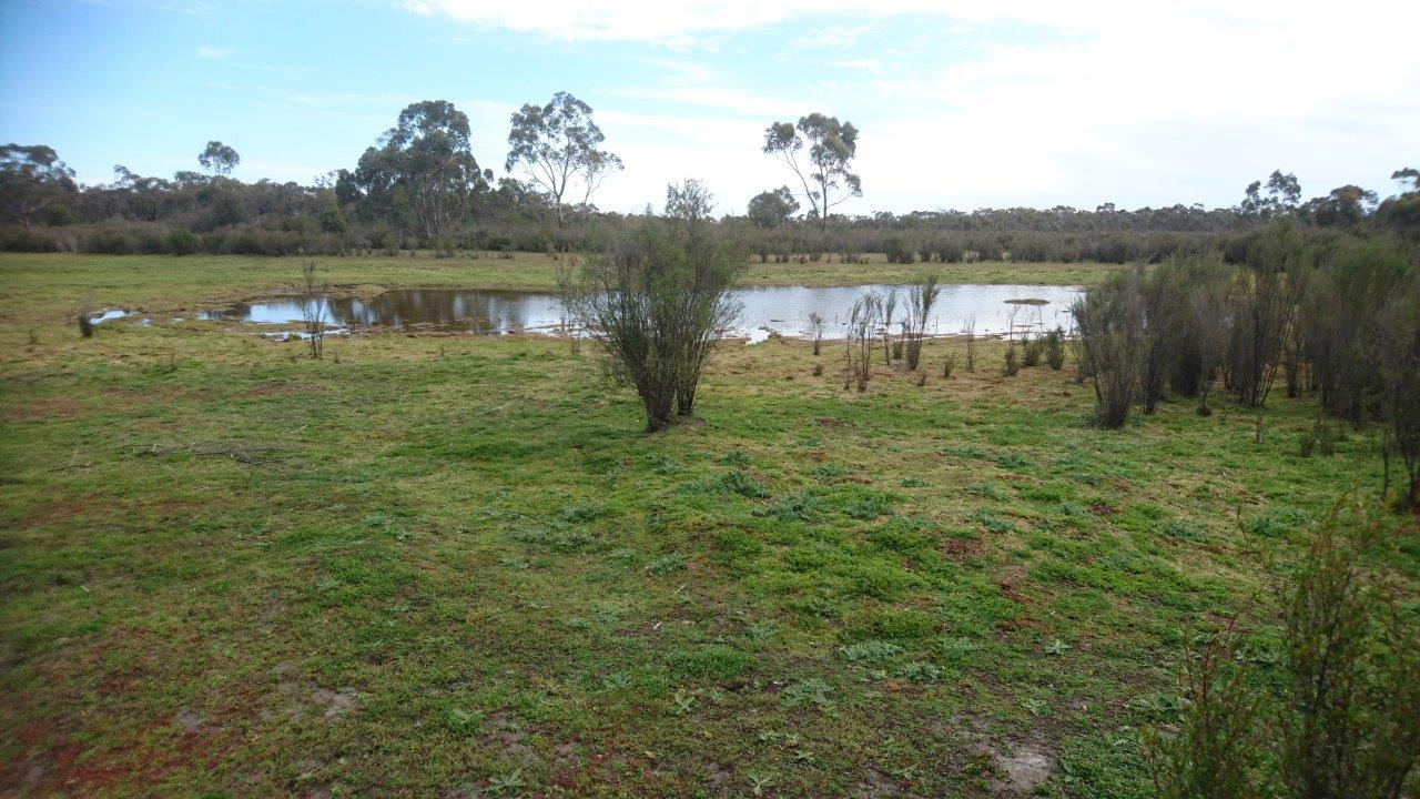 One of the few, previously deep, peat swamps in the Boilaar Swamp chain of wetlands that is holding any water this year. Many of the swamps are now becoming overgrown by tea-tree and swamp gums which are invading downslope.