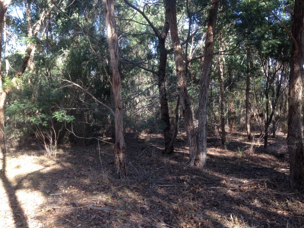 13 year old biodiversity corridor planted between Gower Conservation Park and Windy Hill Native Forest Reserve