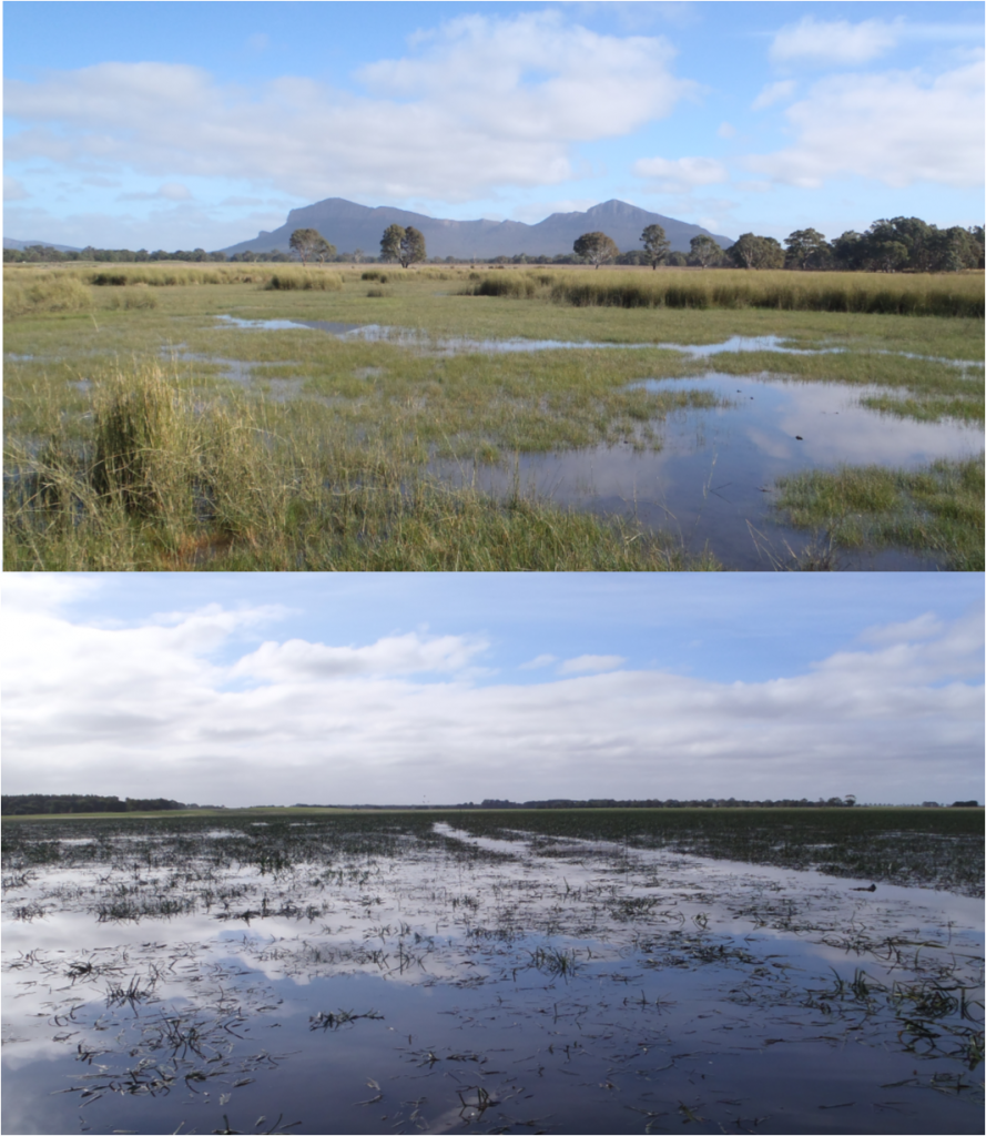 Brady Swamp (top) and Green Swamp (bottom).