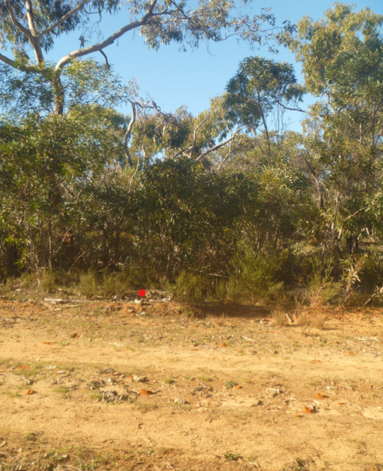 Habitat where Malleefowl was seen at Desert Camp Conservation Reserve (photo: Sam Rothe)