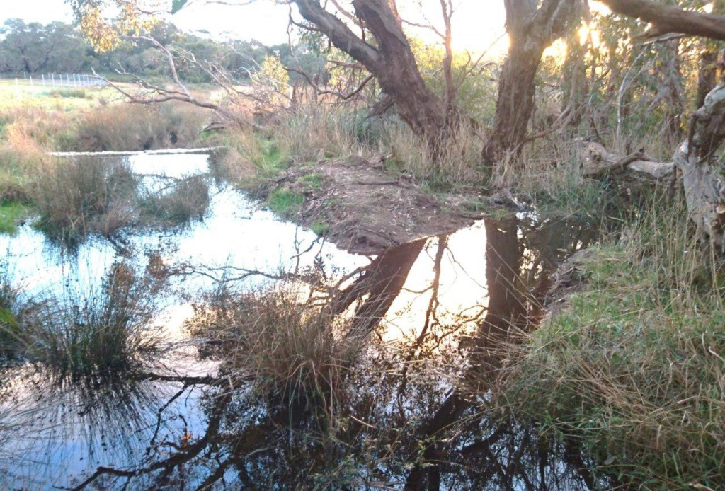 Structure 5 operational at last in winter 2017: lifting levels in the drain and forcing flows back down the original watercourse towards the top of Glenshera Swamp.