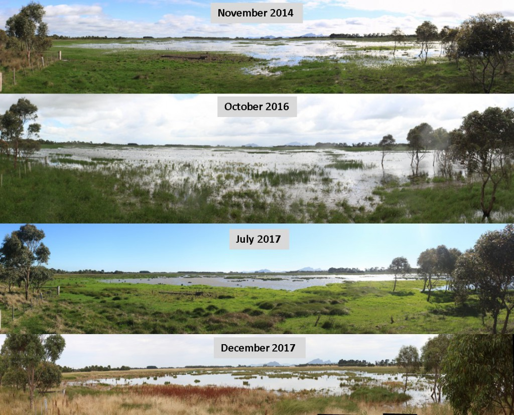 Panoramas of Scale Swamp, showing a timeline of change since restoration.