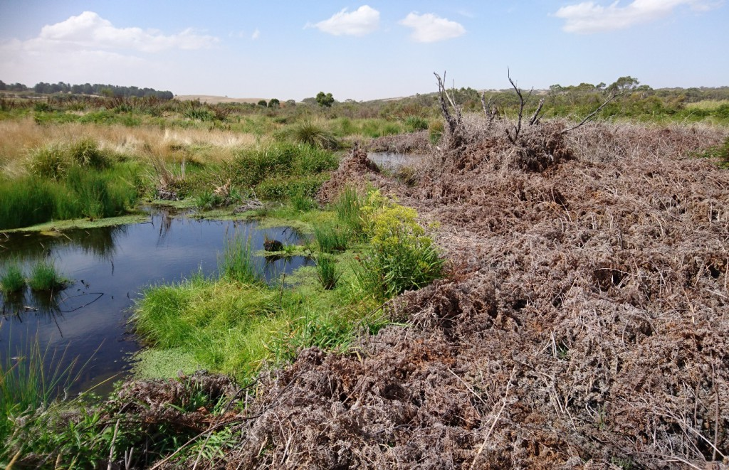 Formerly drained peatland in transition. Photo: Mark Bachmann