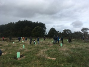 Bank Australia planting day (August 2017)