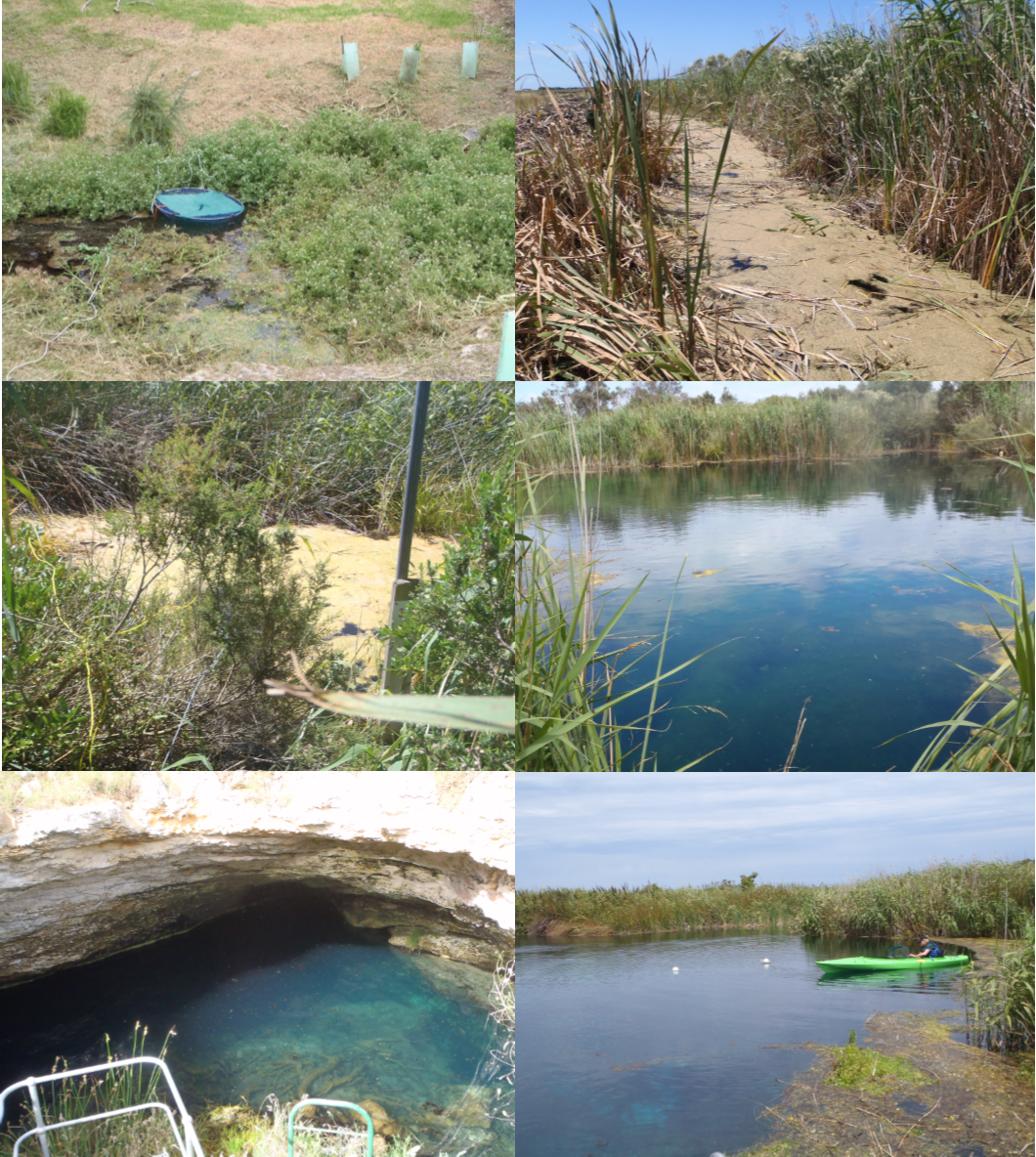Selection of monitoring sites in summer 2017/18 (clockwise from top left): Isolated – Clarke Park; Jerusalem Creek – Little Piccaninnie; Hitchcox Drain – Bones Pond; and Deep Creek – Stratmans Pond; Isolated- The Pines; Eight Mile Creek – Ewens Pond 3.