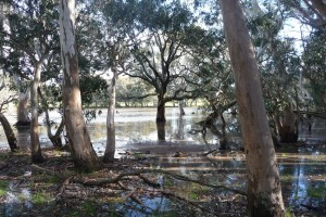 inundated-Swamp