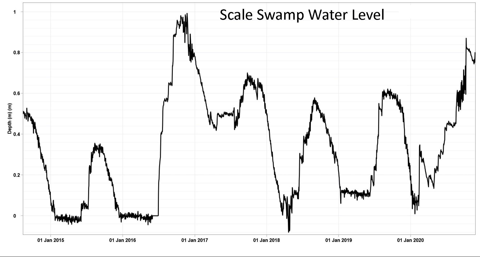 Scale Swamp Nov 2020